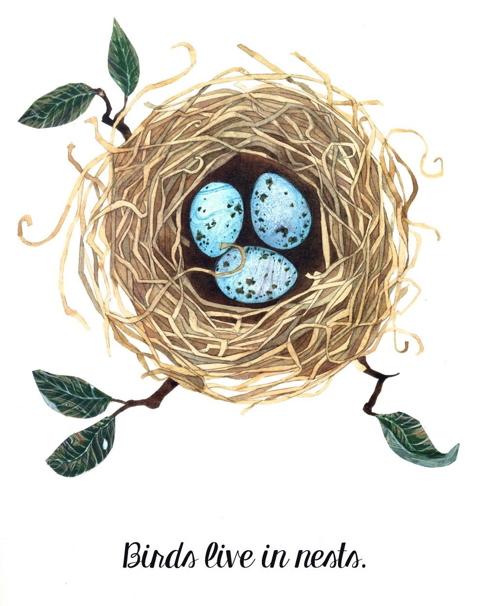 Birds live in nests